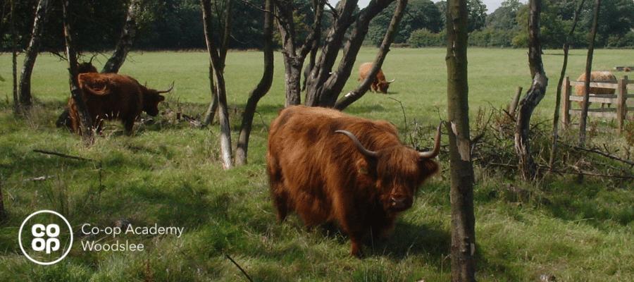 Trip to Croxteth Hall Farm